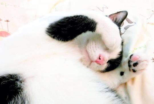 貓咪用最「喵」的方式愛你,教你另一種別離