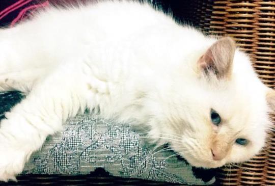 【老貓照護】家有高齡貓之八大照護重點