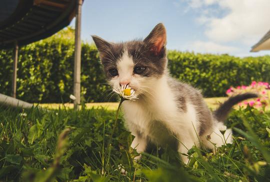 心中住了一隻貓:當你遇見小奶貓,請把牠當成上天給的珍貴禮物