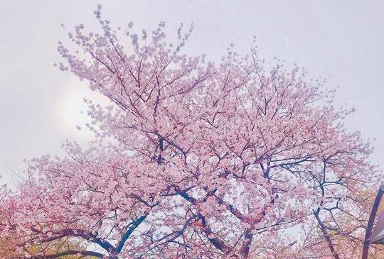 【妤玟美食記】2019全家東京遊記