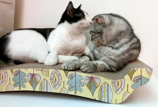 【抓!抓!抓】還沒抓就愛上的多用途簡約貓抓床