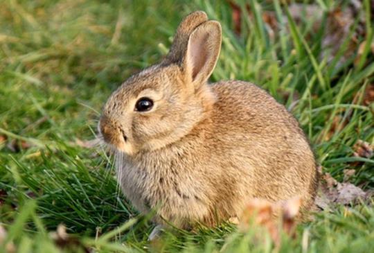 【台北市愛兔協會】每一份力量,都是幫助兔兔獲得幸福的能量