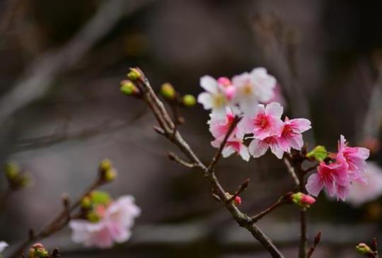 春季賞花去-中正紀念堂