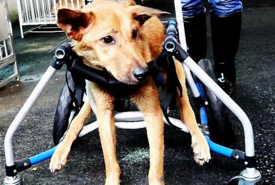 【新北市零安樂】提供收容傷殘動物長期照顧方案