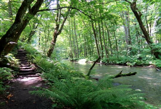 【日本青森。奧入瀨溪流】在挑高鮮綠森林天帳下,大口呼吸芬多精,盡情沐浴在負離子裡!