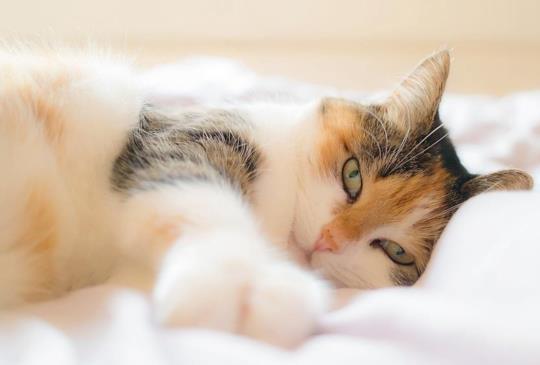 【Petopia 貓咪褓母、旅館媒合服務】從自身需求出發,看見消費者真正的渴望