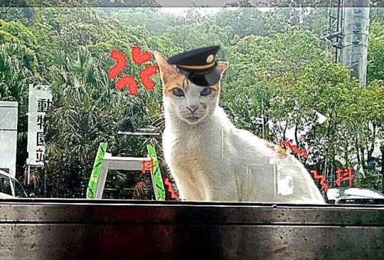 【貓纜也有貓站長!】躲颱風結緣,正式「掛牌」貓纜首任站長