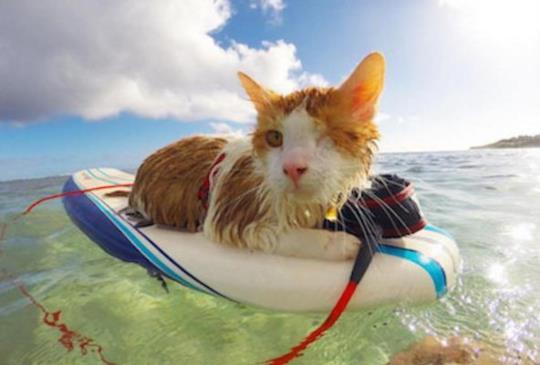 即使只有一顆眼睛,也能稱霸大海,征服大浪的最佳獨眼衝浪高手!(內含影片)