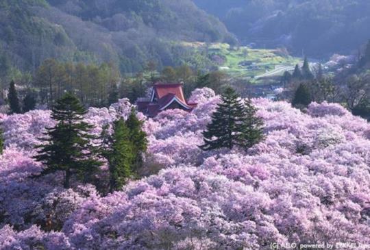 【2016賞櫻指南】來看看日本人所推薦的賞櫻景點