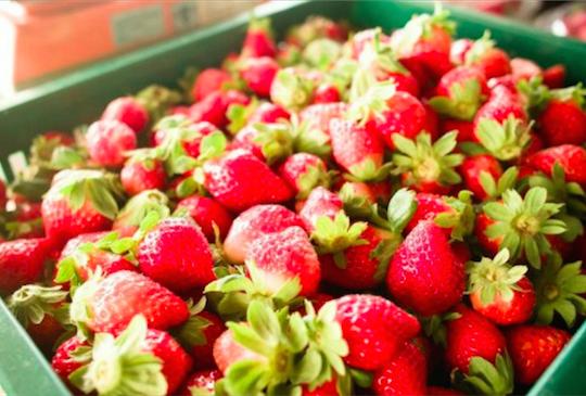 【冬季限定♥ 採了莓】 2016台灣採草莓完全攻略