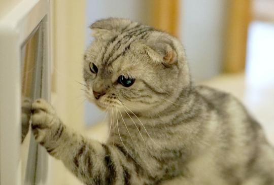 【救救北極熊・消滅黑眼圈】零失敗的貓門安裝5大密技