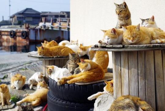 【尋找萌物之旅】融化人心的動物旅程正夯,日本前10大動物景點推薦!