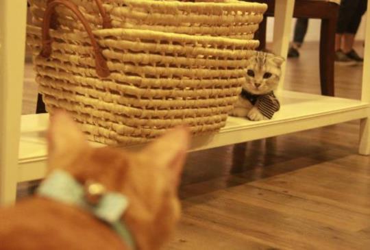 【肉球特蒐隊】週末下午輕旅行 「小春日和」寵物澡堂複合餐廳