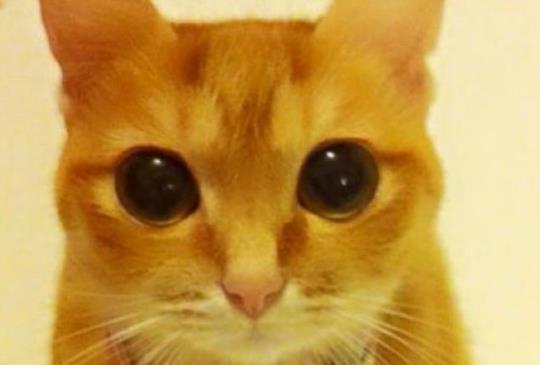 【今日我最萌】真實版靴貓,融化一坨拉庫網友