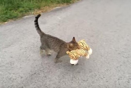 【跟踪提米】嘿!你要帶老虎先生去哪裡??(看到最後頓時融化了 > <)