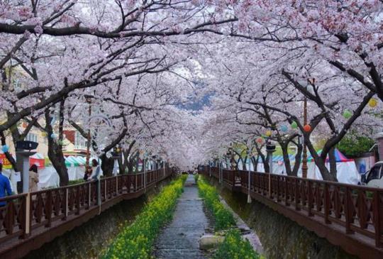 【旅行心情】旅行日本,這5件事千萬別做