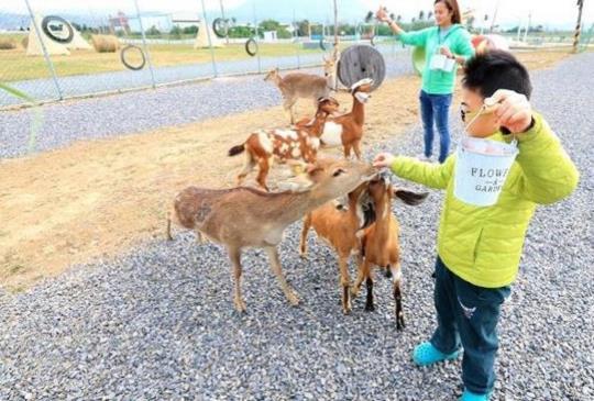 【台灣版小奈良】3個療癒系小鹿園推薦你,快點搭上小鹿斑比的熱潮一起追鹿去吧!