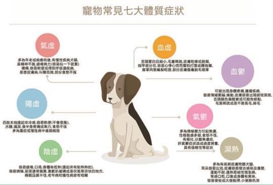 寵物常見七大體質及日常照顧建議