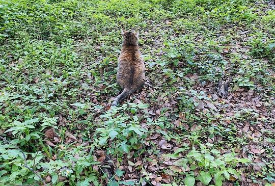 如果貓咪有這些行為,也許是偷偷的在關心你喔!