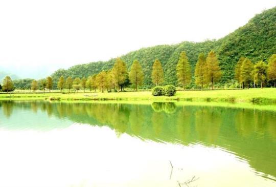 【宜蘭】座落清幽環境旁的綠意湖畔:蜊埤湖落羽松