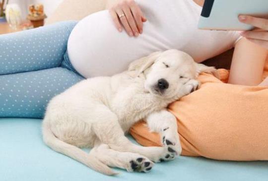【媽咪不要拋棄我】破除迷思!懷孕和養寵物不衝突