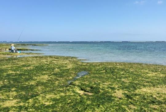 【和日本漁人在畫裡旅行,沖繩奧武島吃天婦羅囉!】跟著江洋大盜看琉球 Part 2