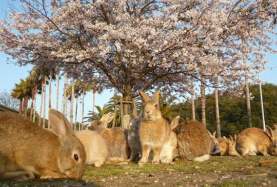 【最讓日本人感到莫名其妙,卻最受外國遊客歡迎的5處動物景點】