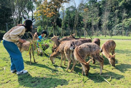 不必飛奈良也能和小鹿亂撞!宜蘭新景點「斑比山丘」看這篇
