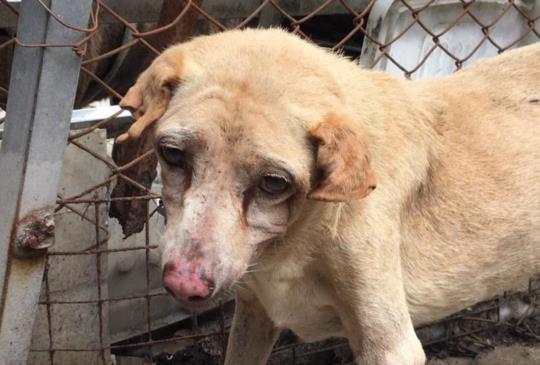 愛媽突過世於狗園廁所 43隻犬貓餓6天待好心人認養
