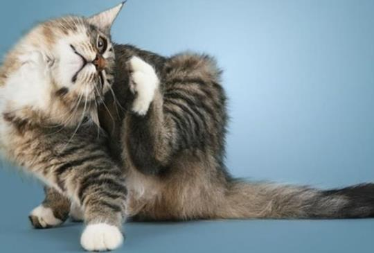 【寵物診療室】貓狗也會得香港腳!?抓癢、舔腳、掉毛不可輕忽