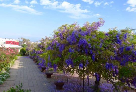 【台灣三月限定!除了櫻花,不可錯過的美景情報】