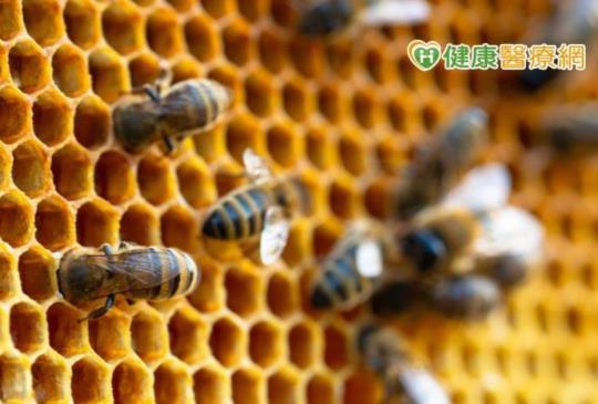 台灣綠蜂膠權威全面解析 黃中洋博士:小心假貨!
