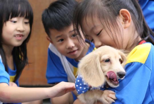 【浪浪的春天】第一隻伴讀犬進入校園,讓流浪狗跟小朋友一起享受愛、學會愛!