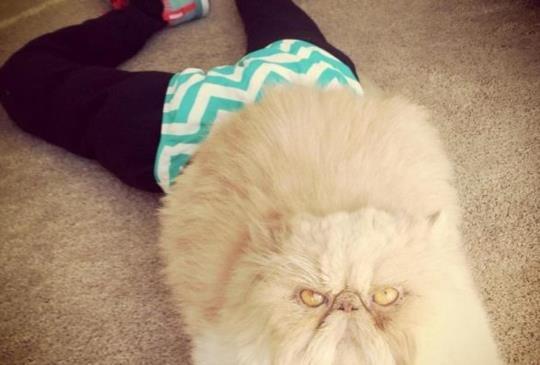 【貓咪創意照】21隻比人類適合穿褲襪的喵星人