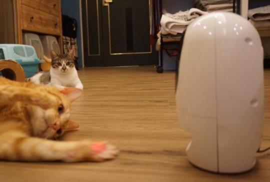 【家裡沒大人啦!】波寶Pawbo寵物攝影機 讓主人隨時陪寶貝說話玩耍零距離