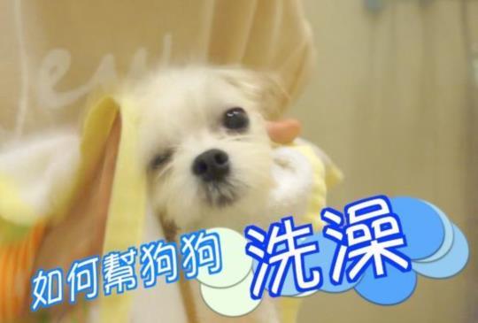 沛莉教你幫狗狗洗澡/清耳朵/吹風,第一次就上手!