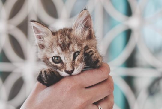 【飼主必讀】自家貓狗不絕育、要生寶寶都要申請 違者可罰25萬