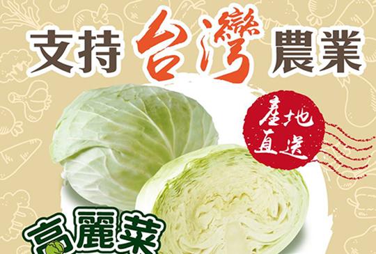 【全台送高麗菜】吃高麗菜挺農民活動! 全民一起來吃好吃滿!
