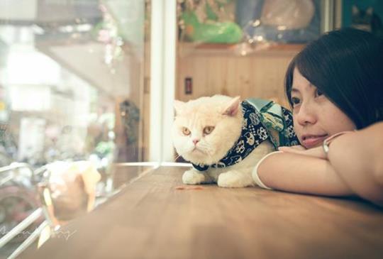 【Only U 你是唯一】寵愛攝影故事作品欣賞(三)貓咪小多拉