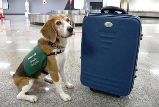 【收容所的春天】流浪狗逃出死牢 榮登狗醫生、檢疫犬、巡邏犬
