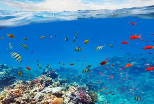 在海中盪鞦韆?平常做不到的,就來澎湖試試吧!
