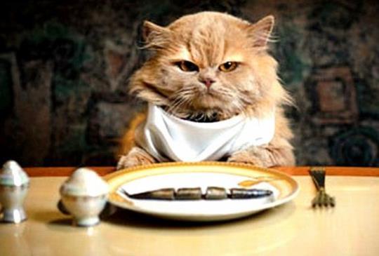 【貓狗飲食禁忌】這些東西不能吃!