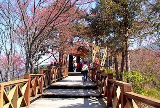 休園七年的【高雄】藤枝國家森林遊樂區即將重啟!