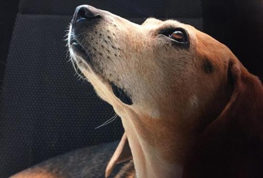 寵物罹患腫瘤癌症的餵食照顧與提醒