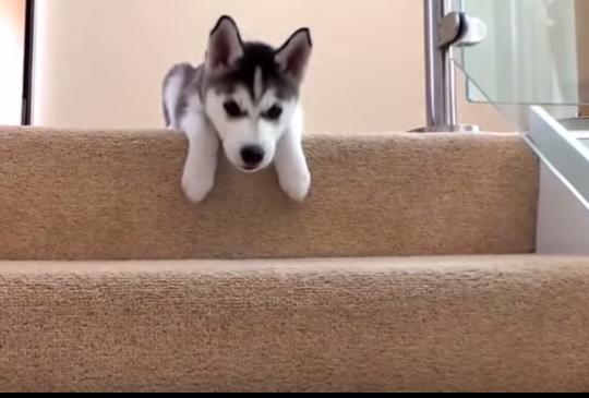 【下樓奇招】你絕對沒看過的各種下樓梯方式......