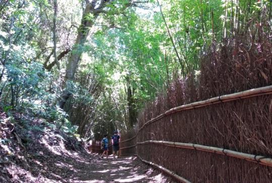 【台北。陽明山】秋日到,走步道~橫嶺古道環狀步道輕鬆健行去!