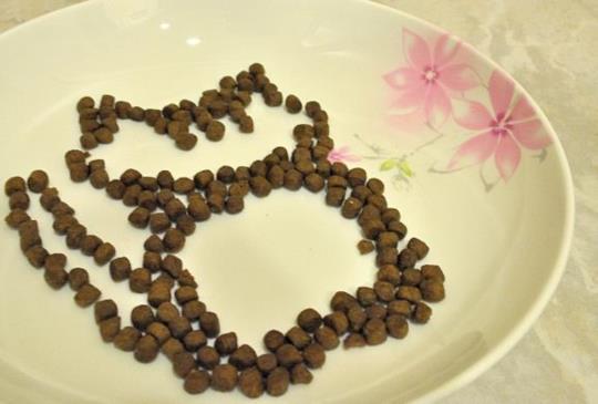 【寵物飲食】乾飼料篇(上)貓咪營養需求與乾糧優缺點