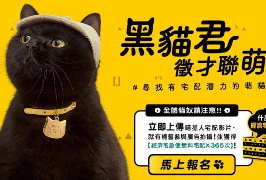 【黑貓徵黑貓!】徵才廣告超可愛:把你家萌萌黑貓變廣告明星還可抽獎!