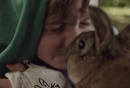 【兔迷共賞】荷蘭真實兔子電影《兔麻吉》療育你的心