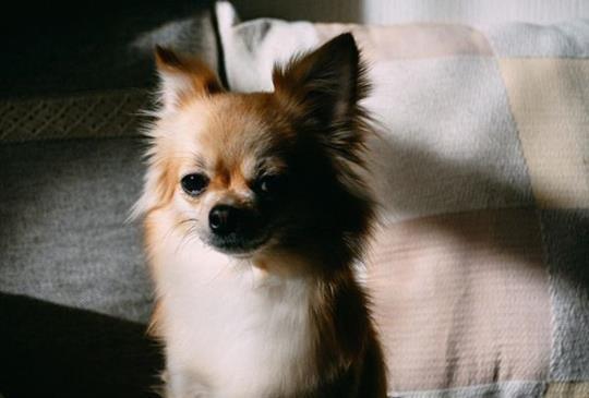 中獸醫師談--造成寵物疾病的六種邪氣(四):燥